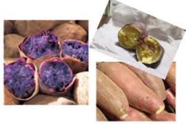 焼き芋の種類