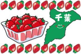 イチゴ狩り千葉県