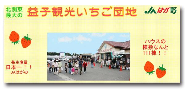 JAはが野益子観光いちご団地(栃木県・益子町)