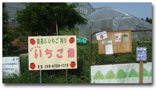 ひでくんちのいちご畑