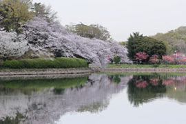 県立三ツ池公園花見