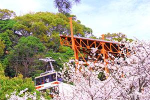 須磨浦公園に桜
