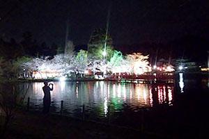 八鶴湖の桜の開花