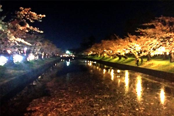 鶴岡公園の桜ライトアップ