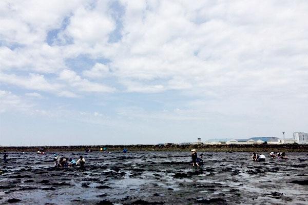 木更津海岸中の島公園で潮干狩り