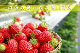 イチゴ狩り 福島 四季の里