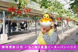 静岡でいちご狩り 掛川市のピーターパンハウス