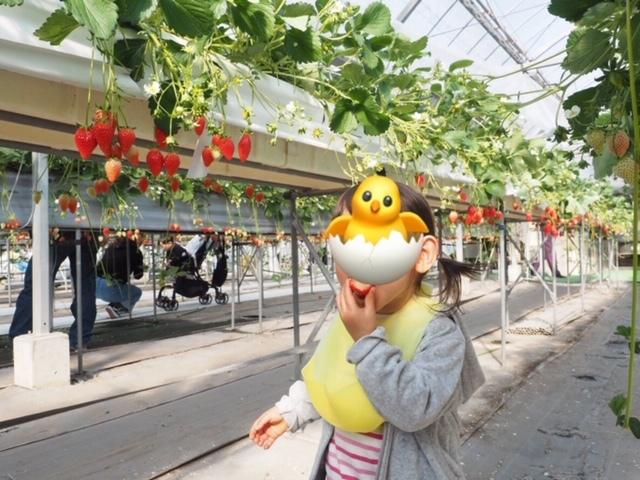 静岡でイチゴ狩り ピーターパンハウス