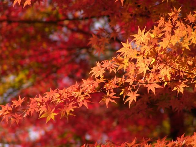 名古屋市東山動植物園の紅