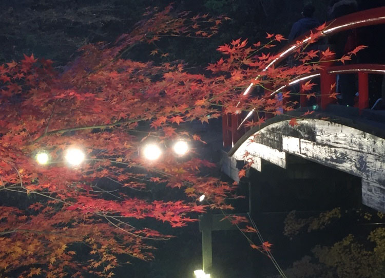 河鹿橋のライトアップ
