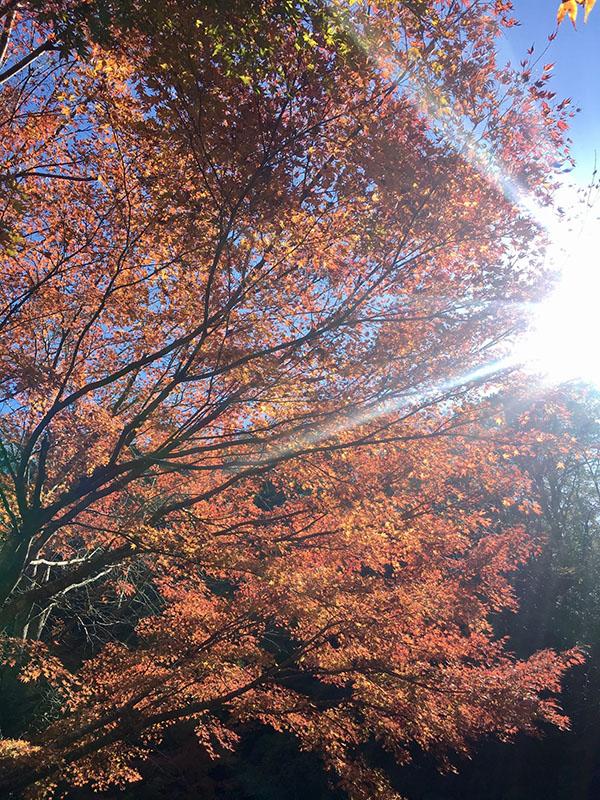 養老渓谷 紅葉狩り写真1