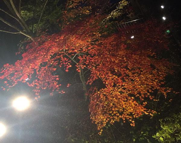 河鹿橋の紅葉狩り写真