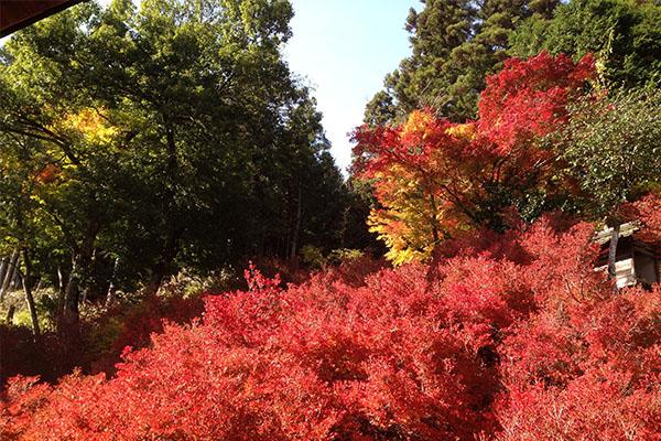 兵庫県安国寺の紅葉狩り