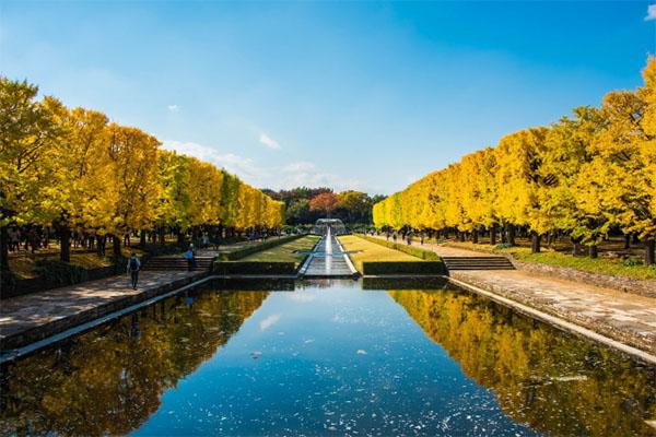昭和記念公園の紅葉カナール