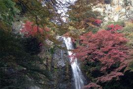 箕面(箕面大滝)の紅葉