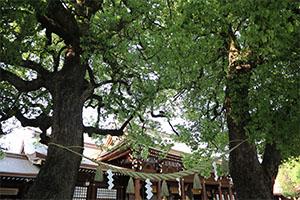 明治神宮初詣のアクセス