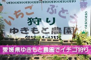 愛媛県ゆきもと農園