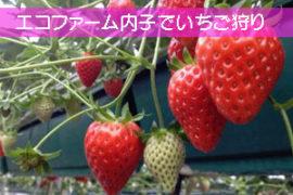 愛媛県でいちご狩り内子町 エコファーム内子