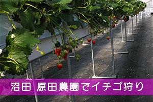 沼田の原田農園へイチゴ狩り