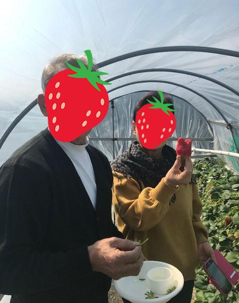 早川農園 いちご狩り